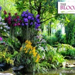 The Blooms Orcid Park