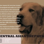 central asian-page-001
