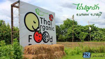 organic_600-315