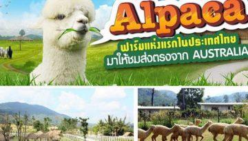 alpacahill_600-315