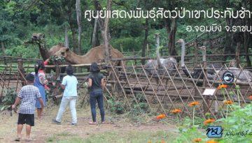 dis-zoo_600-315