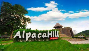 600 of Alpaca Hill