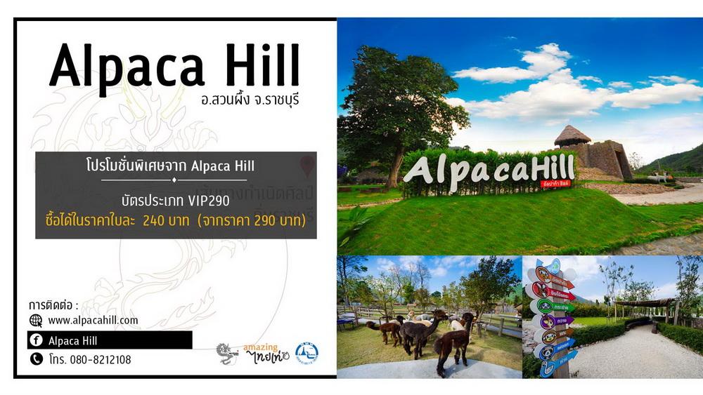 Alpaca Hill